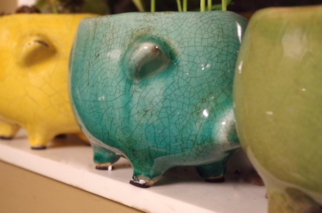 Brightly colored ceramic pig herb planters