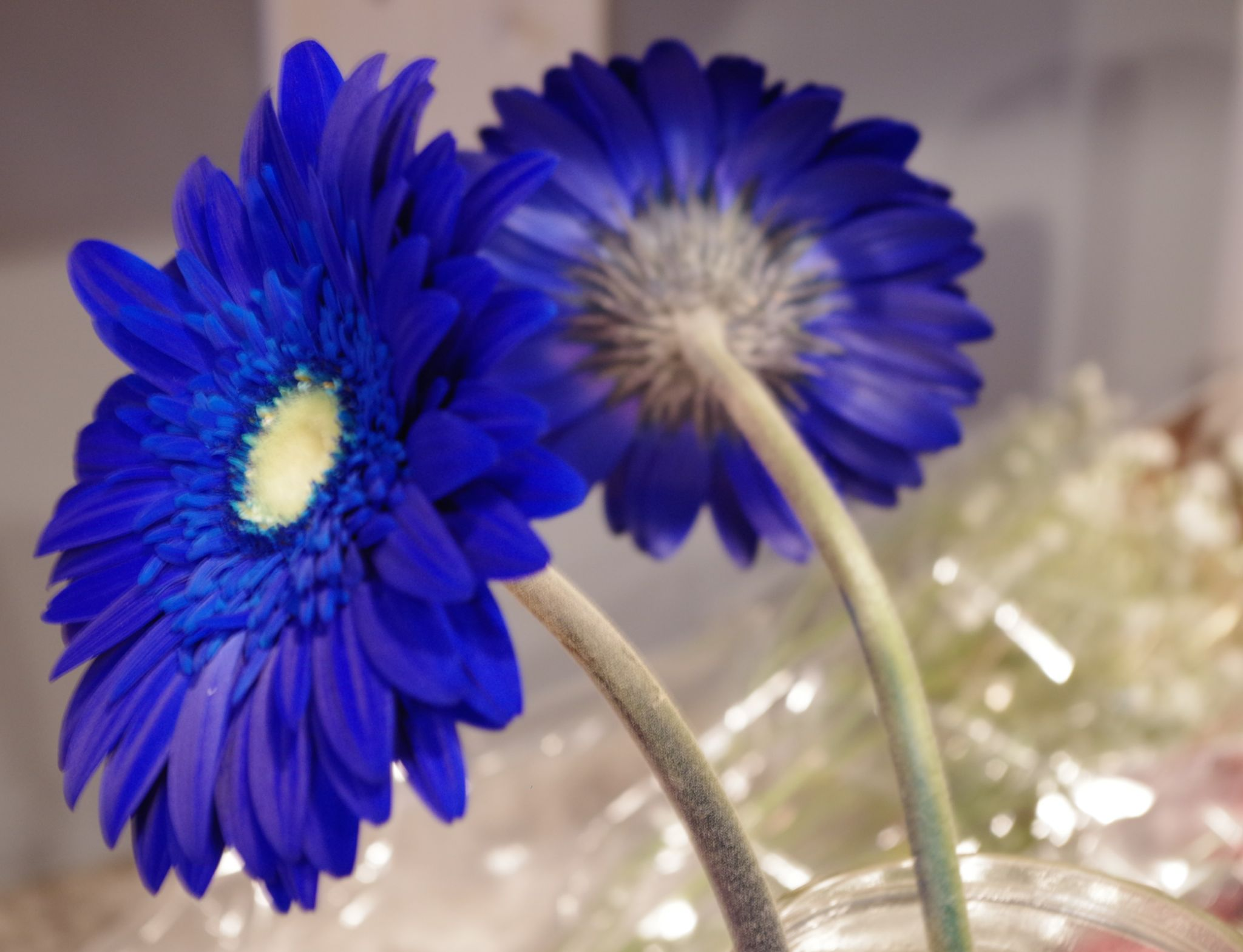 Two Blue Daisies