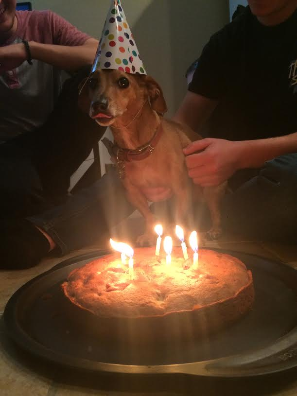 dog ready to eat his cake