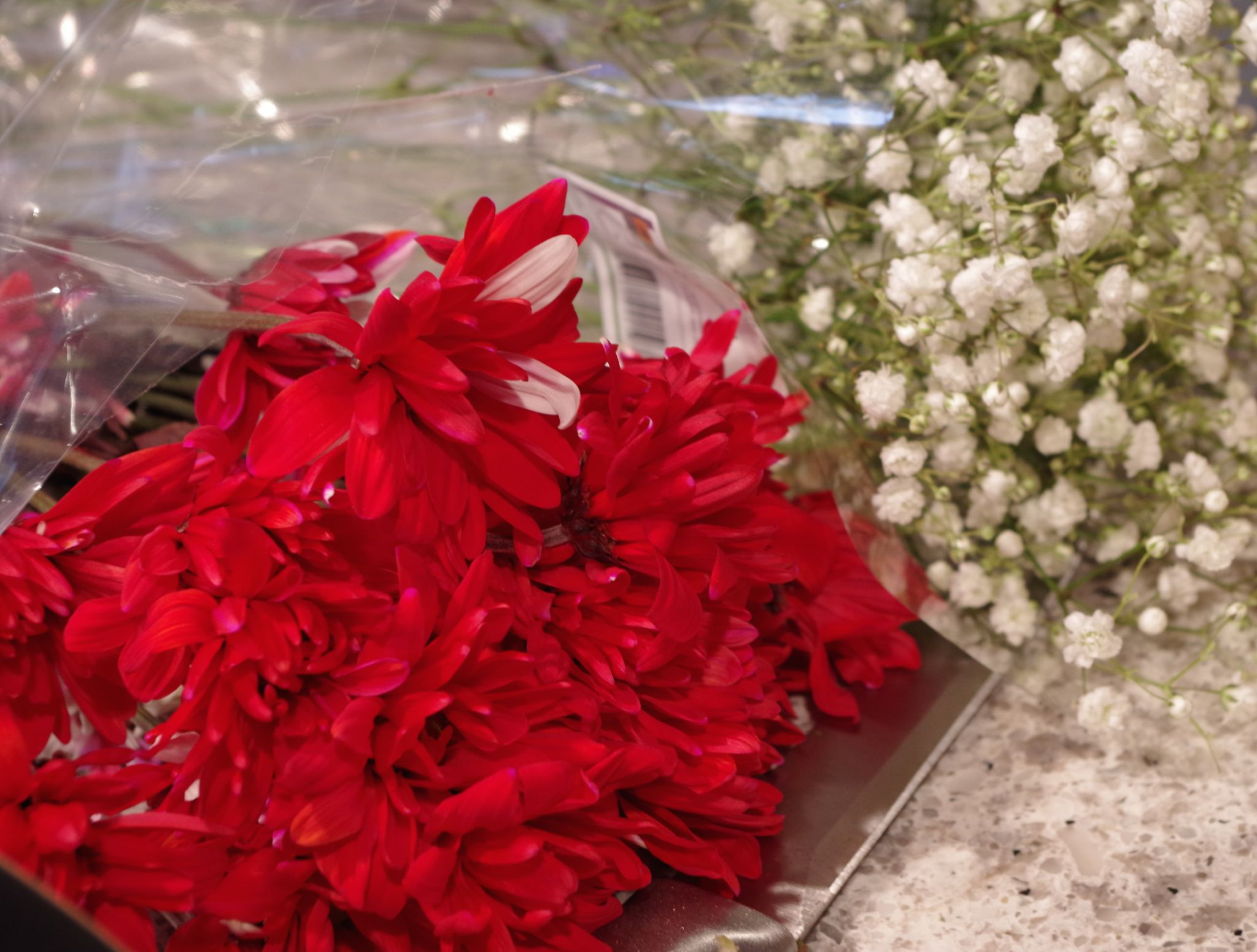 red carnations and baby's breath